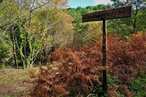 fall hiking abeliona