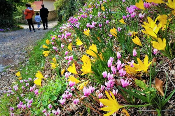 fall flowers mountains peloponnese