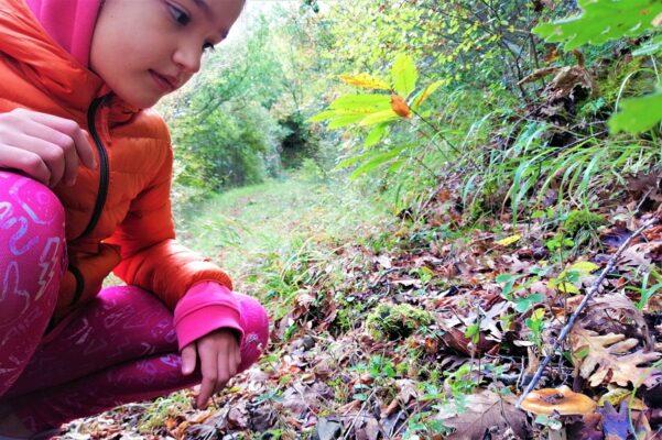 kids mushroom peloponnese